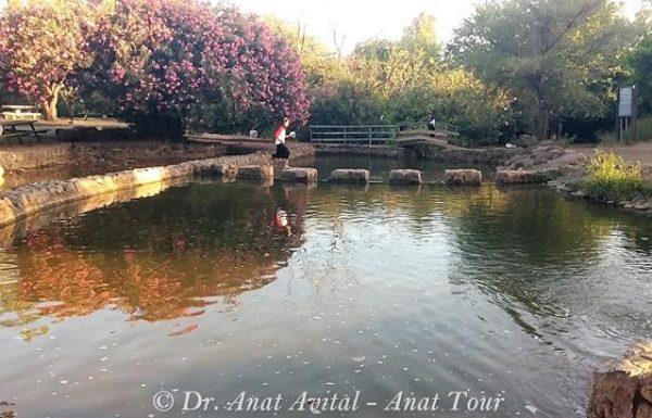 פארק הירדן: טיול מים, ברכות ואטרקציות