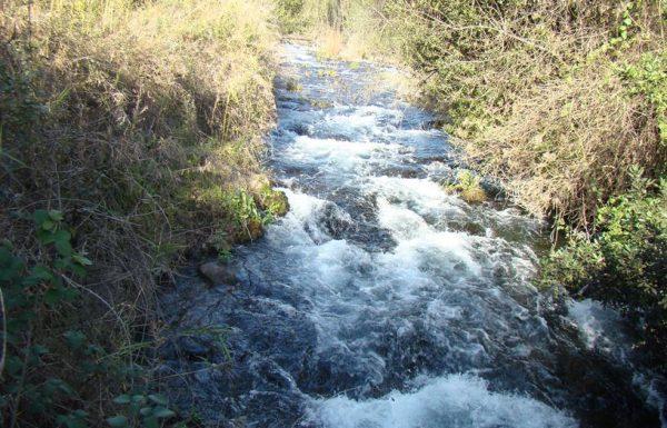 שמורת תל דן: טיול מים ונחלים זורמים בצפון