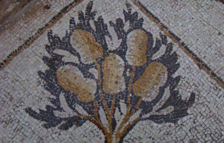 תיאורים צמחיים של אתרוגים בפסיפסים מהתקופה הביזנטית