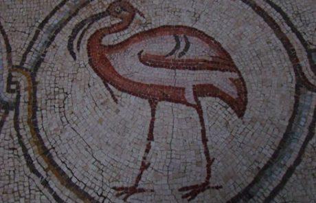 טיול אל ארמון פסיפס הציפורים בקיסריה: אמנות וגן חיות ביזנטי