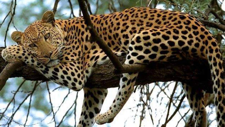 דיל מוזל לטיול מאורגן באפריקה: טנזניה בפורים בקבוצה קטנה 7.3.17 – 14.3.17