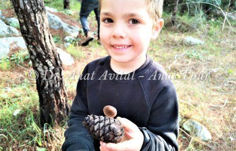 יערות בן שמן ויערות מודיעין: טיולים, אתרים, צמחייה