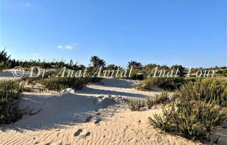 שמורת טבע ניצנים וחוף ניצנים: גלישה בדיונות וחולות, עקבות בעלי חיים, חוף ים מהיפים בישראל