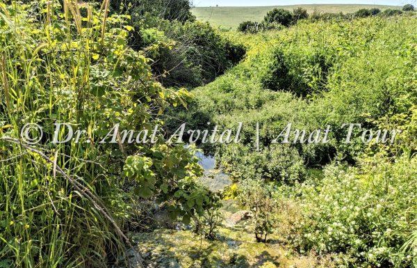 צמחיית מים ונחלים, בתי גידול לחים, צמחי שלוליות חורף וביצה בישראל