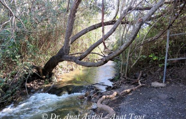 שמורת טבע המג'רסה: טיול מים ואטרקצייה רטובה בצפון