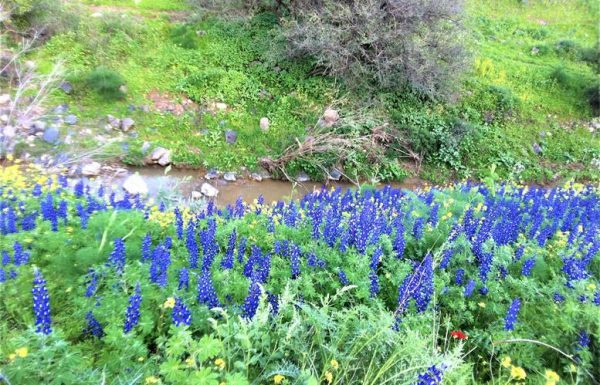 נחל תבור: טיול אתגרי – קניון הבזלת עם מים זורמים ופריחה מטרפת בחורף ובאביב