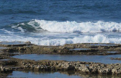 אזור הכְּרִית בחופי הים התיכון, שוניות וטבלות גידוד ימי, חי וצומח