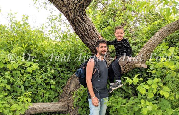ערבה מחודדת: עץ על פלגי מים, נחלים ומעיינות