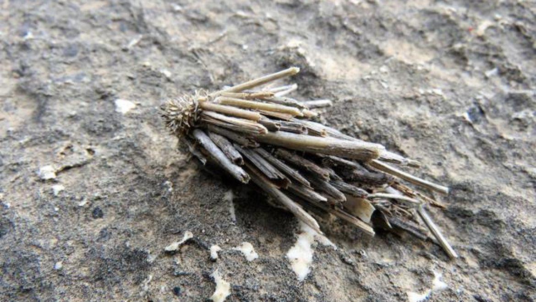 ססתיקיים: זחלים של עשים שבונים בית מסתור חכם