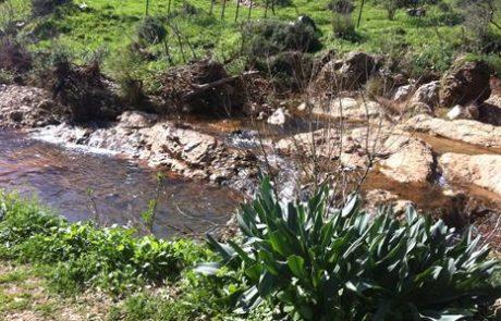 נחל צלמון תיכון: טיול מים קצר לכול המשפחה בצפון הקרוב