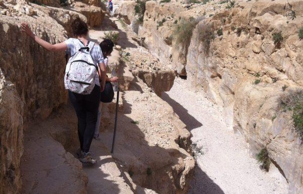 משאש-מורבעת: טיול מיטיבי לכת מומלץ בקניון במדבר יהודה