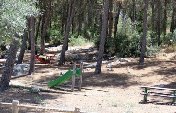 חניון בחורשת מושב צלפון – גיזו: יער אורנים, מתקנים, שולחנות פיקניק