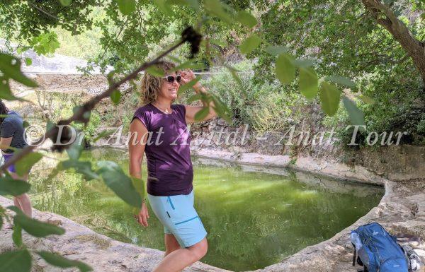 עין ספיר ועין אשקף: טיול מים קצר בהרי ירושלים – כל היופי בטיול קצר