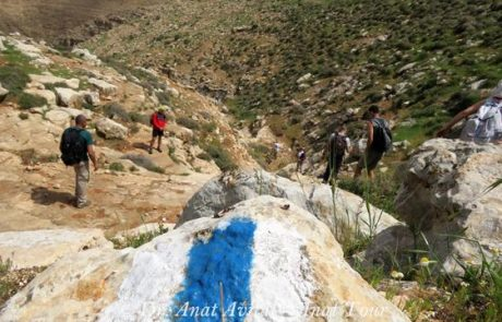 """ואדי עוג'ה  – נחל ייט""""ב: טיול מיטיבי לכת במדבר השומרון"""