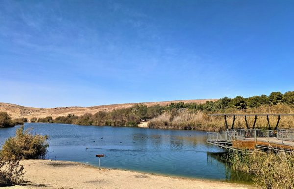 אגם ירוחם: פארק אטרקציות, חניון ואתר טיולים אל פריחת אירוס ירוחם וחלמוניות