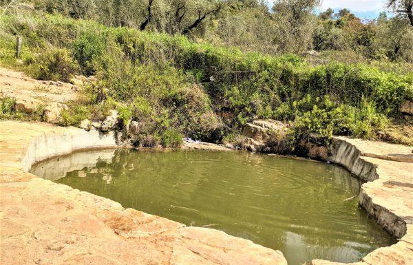 """פארק גיבורות התנ""""ך בגוש טלמונים: טיול מעיינות וברכות מים לרחצה ושיכשוך, פריחה"""