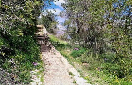 שמורת טבע המסרק: טיול יפה בחורש ירוק
