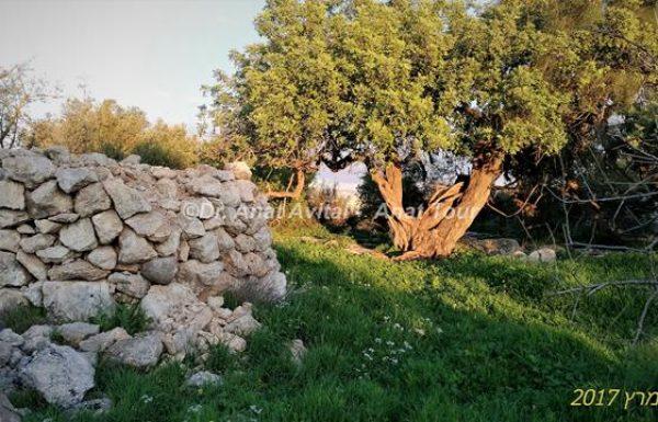 גבעת שר: שביל טבע ומתקנים חקלאיים במודיעין