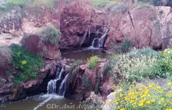 מפלי קניון הבזלת בנחל חרוד: על מפלים בעמק בית שאן כבר שמעתם?