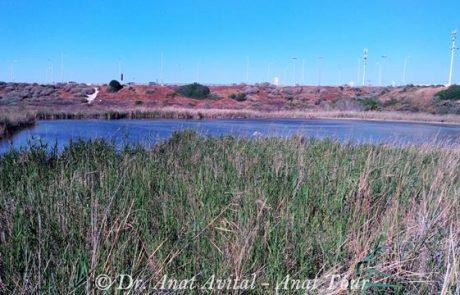 אגם בית ינאי: אגם נסתר מוקף בצמחייה נהדרת