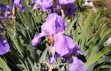 צמחיית הבלקן, פרחי אביב ועצים: מונטנגרו, קרואטיה, בוסניה, אלבניה, סרביה