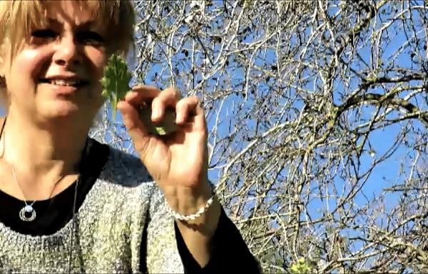איך מכינים מרק עלים בטבע: פעילות הישרדות לסדנת בישול בטיול בשטח