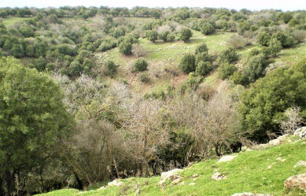 הג'ובה הגדולה: טיול מונגש ביער אודם הקסום בצפון הגולן