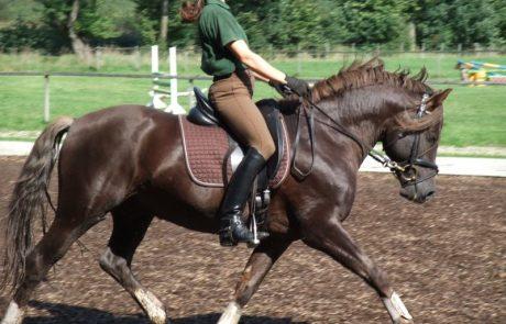רכיבת סוסים: אטרקציה מעוררת פנטזיה בטיולים